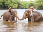 туры  Туры в Индию от УмноТур